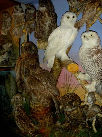 mixed owls 2[1]hutch [640x480].JPG